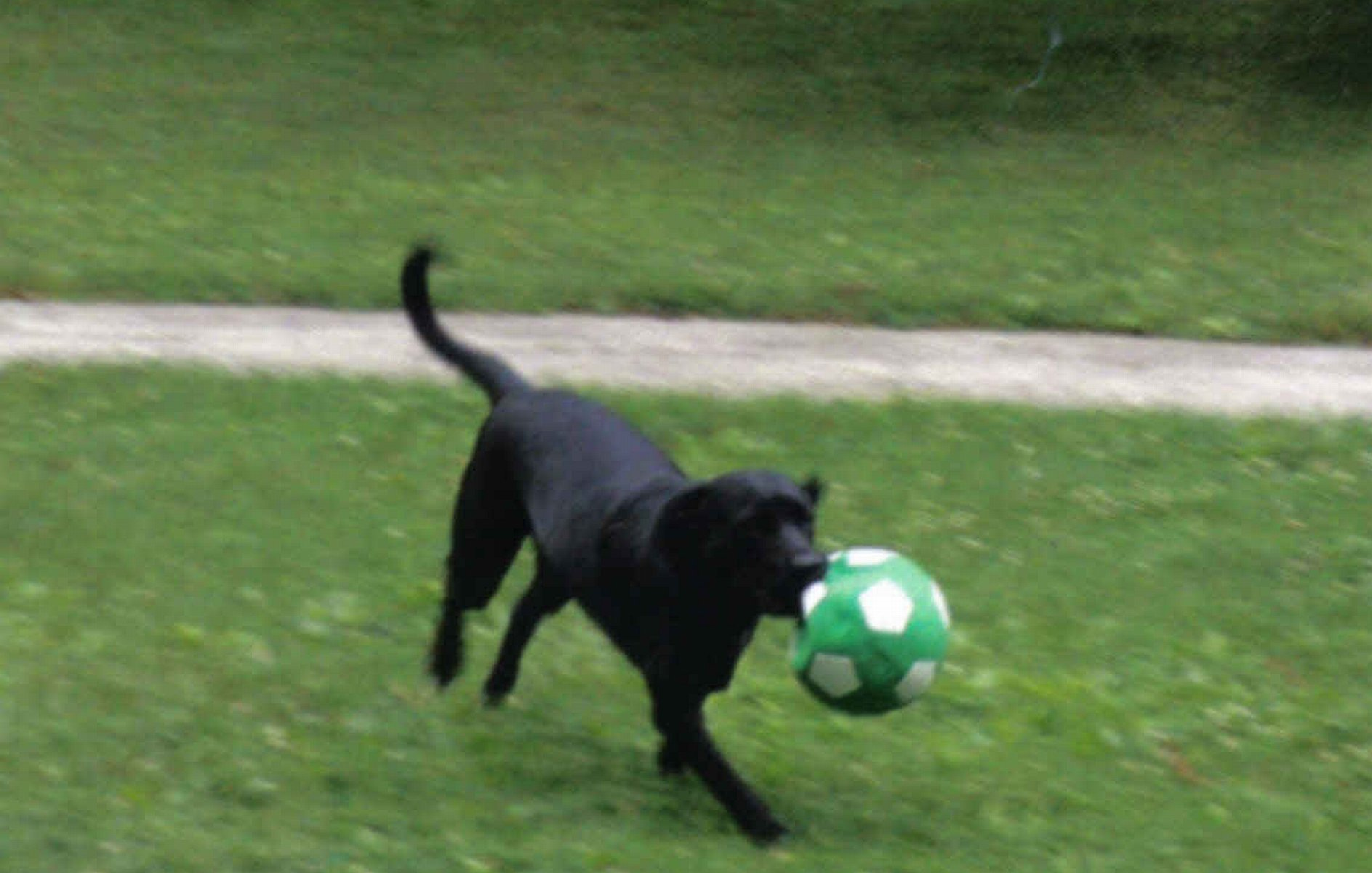 Annie playing soccer.jpg