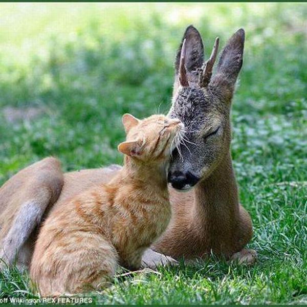 cat and fawn.jpg