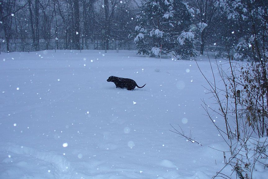 annie in snow 2014.jpg