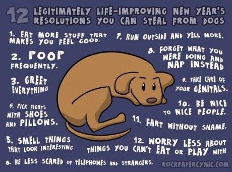 Dog Resolutions.jpg