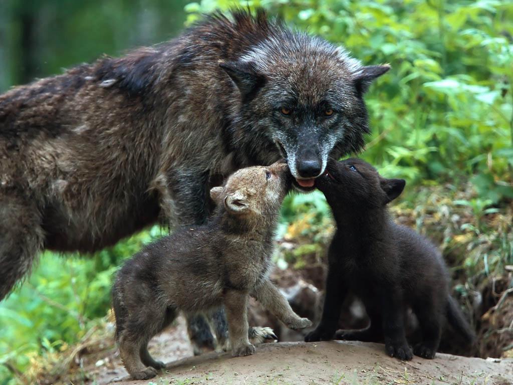 motherly-love-animals-370-12.jpg