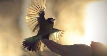 birdsetfree